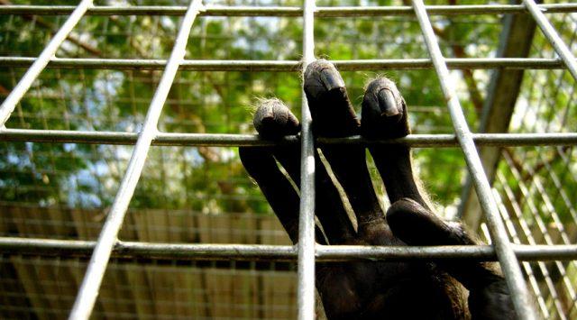 no cage